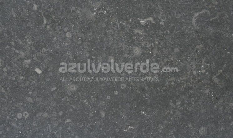 Gris Europa Limestone